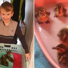 Wildlife-lover Mikey Clayton rescued six abandoned ducklings after a family walk in Soham on Monday, April 5.