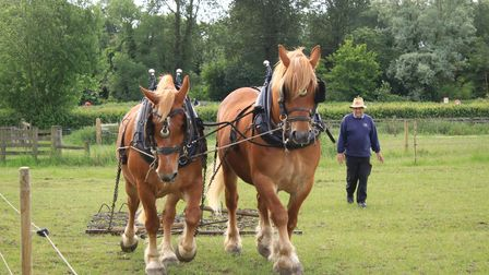 Suffolk Punch horses - one of the county's pride and joys