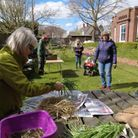 Judith Thompson and volunteers, separating and packaging snowdrop bulbs for delivery to care homes
