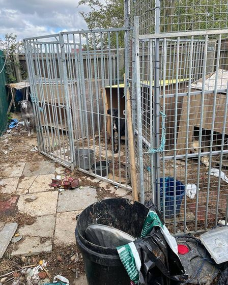 """Police signed over a dog in """"poor state"""" during a welfare site check in Thorney on Thursday, April 15."""