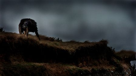 Black Shuck haunts Norfolk folklore, a dark figure which stalking through the county since the 16th century.