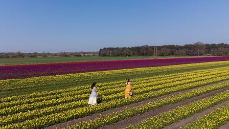 Marcia (left) takes a photo of her friend Nuria amongst rows of tulips which have burst into colour