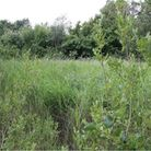 The overgrownpond area on land at Ilketshall, prior to transformation.