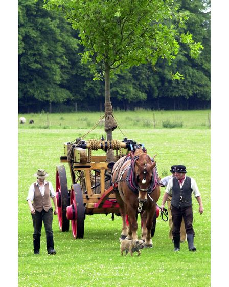 Nigel Oakley leading the Suffolk Punch horses for a tree planting at Kentwell Hall in 2002
