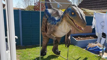 David Abbott will be walking his dinosaur, which he imported fromabroad, through the streets of March