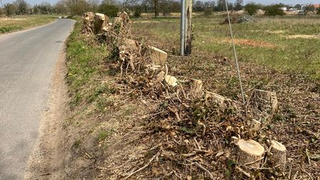Trees and hedgerow on Little Melton Road in Hethersett have been cut down ahead of development by Persimmon and Taylor Wimpey
