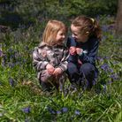 Anna and Maria Gornall having fun amongst the bluebells in Freston Woods. Picture: Sarah Lucy Brown