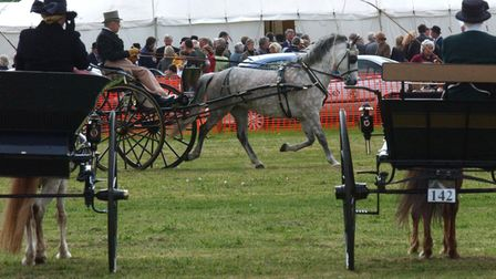 Carridge driving at The South Suffolk Show near Bury.PIC MICHAEL HALLEADT 13.5.03EADT 29 0
