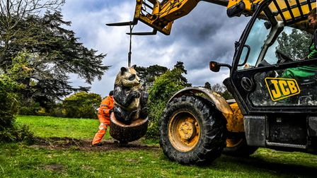 The arrival of the new panda sculpture at Nowton Park