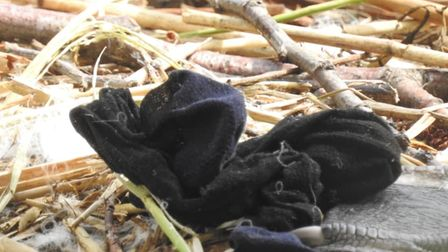The hair scrunchie that was stuck around the swans foot