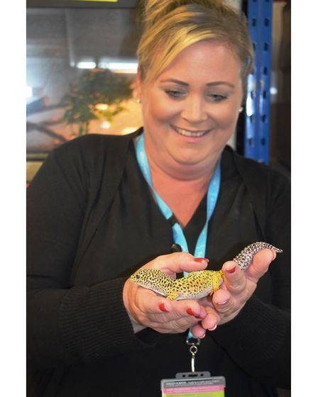 Charlotte Rossiter, organiser of the Big Day Out at Suffolk Rural, facing her fears by handling a gecko