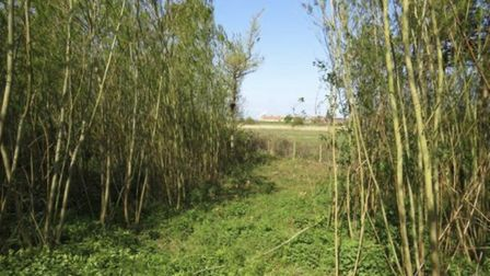 Woodland and willow plantation in Wiveton, Norfolk