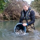 The Environment Agency has released 24,000 fish into four East Anglian rivers