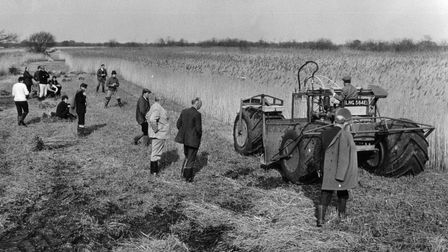 A fully mechanised reed cutting was being demonstrated at Ranworth to a party of thatchers from all over the UK