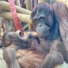 Mum Mali and daughter Tatau are settling into Colchester Zoo.