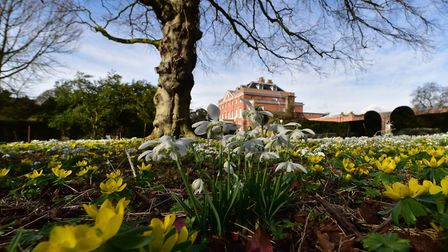 Snowdrops and aconites provide a colourful attraction for visitors to Raveningham Hall and Gardens.