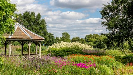 The gardens at Pensthorpe begin to look really colourful especially on a lovely bright afternoon