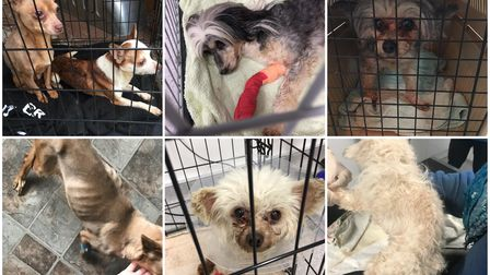 Ravenswood Pet Rescue saved 'The Miricle 9' from a 'horrific situation' after their owner died, as well as 26 other dogs