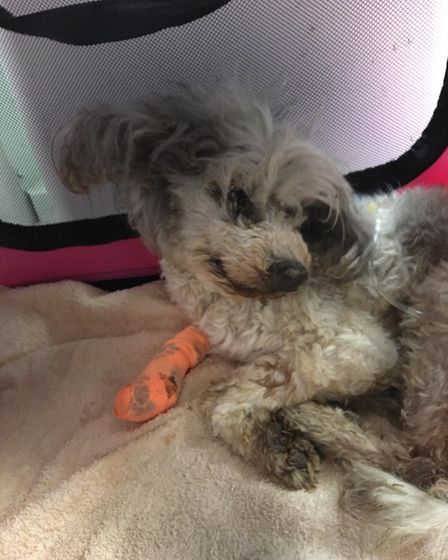 Ravenswood Pet Rescue saved 'The Miricle 9'from a 'horrific situation' after their owner died, as well another26 dogs.