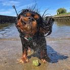 Arthur theCavalier King Charles Spaniel from Suffolk won the competition out of over 500 entries