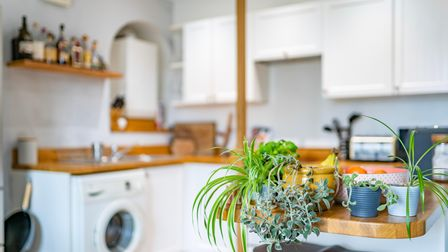 Close up of kitchen with plants, fruit bowl, white base and wall level cabinets, wooden worktops