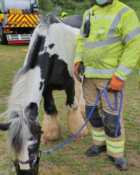 The horse upright afterbeing rescued near Sudbury.