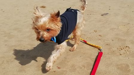 Gucci (now renamed Freddie) was left suffering with the broken front leg for six weeks before he was taken in by the RSPCA.