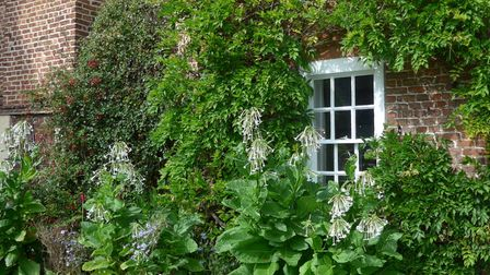 In Wisbech, Elm House will open with its walled garden and three-acre flower meadow from 1-5pm.
