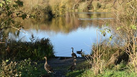 West Stow Country Park