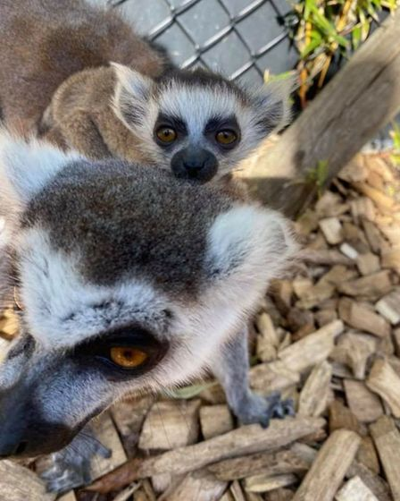 Colchester Zoo said its two new arrivals have both been getting on well.