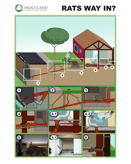 How rats can get into your home by Inoculand Pest Control Services in London