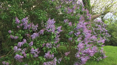 This year's lilac treats carry the vibrant scent of fresh freedom after a lengthy lockdown