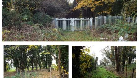 Produced by Network Rail, these photos show the vegetation in and around the site of Soham station