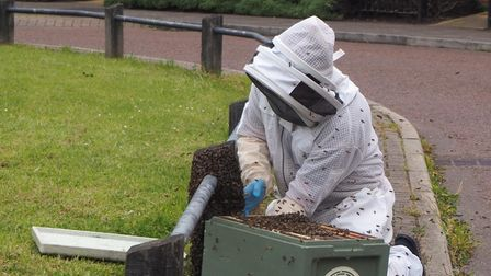 Beekeeper Daniel Thomas says there are more bee swarms around this year because of the cool weather