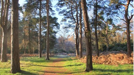 A crisp and sunny morning at Sandringham, where people are being urged to enjoy the country park saf