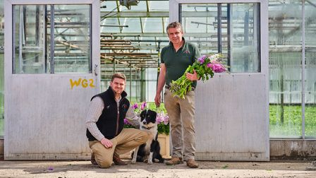 Ian and Phil Collison of Collison Cut Flowers, based at Terrington St Clement, nearKing's Lynn