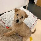 Over 100 dogs were reported abandoned in Suffolk since January 2020, including 10-wee-old Molly