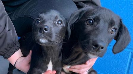 Amber and Poppy were also abandoned in Essex last year when they were believed to be around 16 weeks old