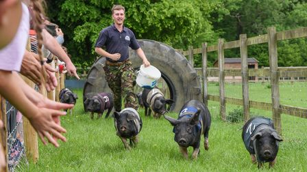 Pig racing at Church Farm on Fincham Road in Stow Bardolph. Picture: Danielle Booden