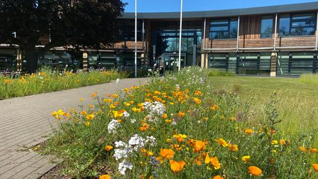 Borders at East Suffolk Council's Melton offices have been allowed to re-wild and boost pollinator communities
