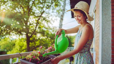 Young beautiful woman watering plants flowers on her balcony of the home house using bucket with wat