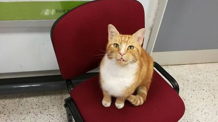 The late Garfield aka Mr Sainsbury's who was killed after being struck by a car in the Ely supermarket car park