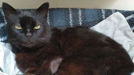 Agatha the cat is looking for her forever home