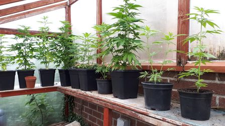 Suffolk police found cannabis plants at an address in Elmswell, near Stowmarket