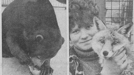 One of the bears and a dog fox at Cromer Zoo in 1968