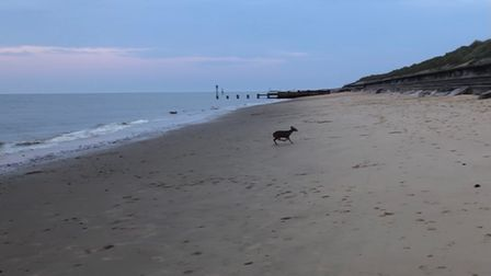 A deer was spotted swimming at Cart Gap beach for around 20 minutes.