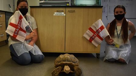 Bowser the tortoise, at Suffolk Rural, has predicted an England victory over Scotland at Euro 2020