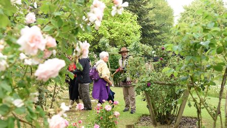 Major Grahame of Daws Hall jas a rose collection of 150 roses Picture: CHARLOTTE BOND
