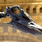 Dippy the Dinosaur is coming to Norwich Cathedral this July.