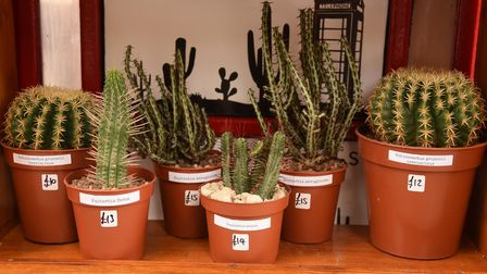 Cacti in the cactus shop, Simply Cactus, in a phone box at Tombland. Picture: DENISE BRADLEY